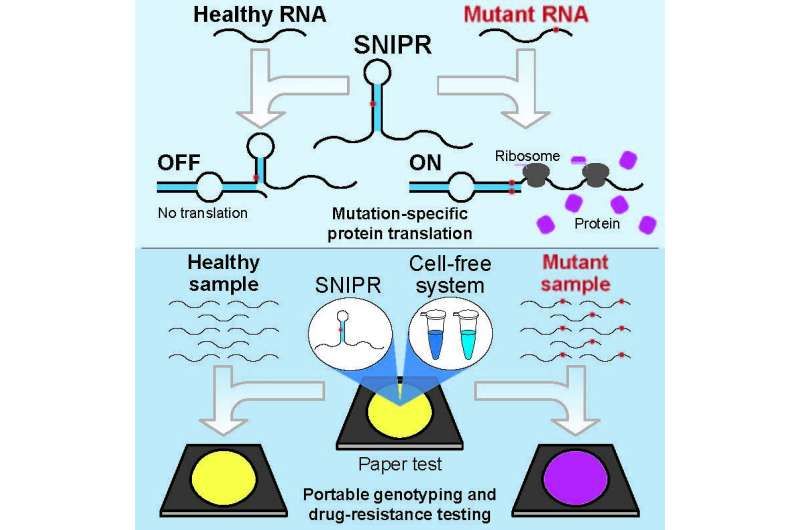 SNIPRs take aim at disease-related mutations