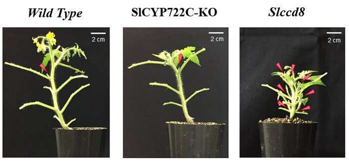 Solving the riddle of strigolactone biosynthesis in plants