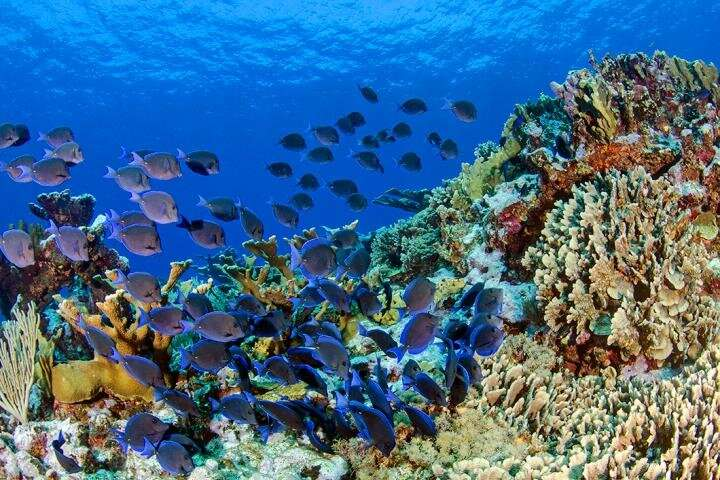 Study finds fish have diverse, distinct gut microbiomes