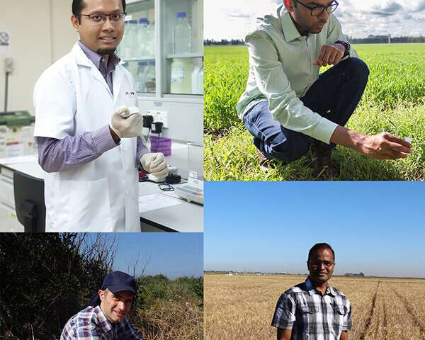 Study finds large-scale expansion of stem rust resistance gene in barley and oat lineages