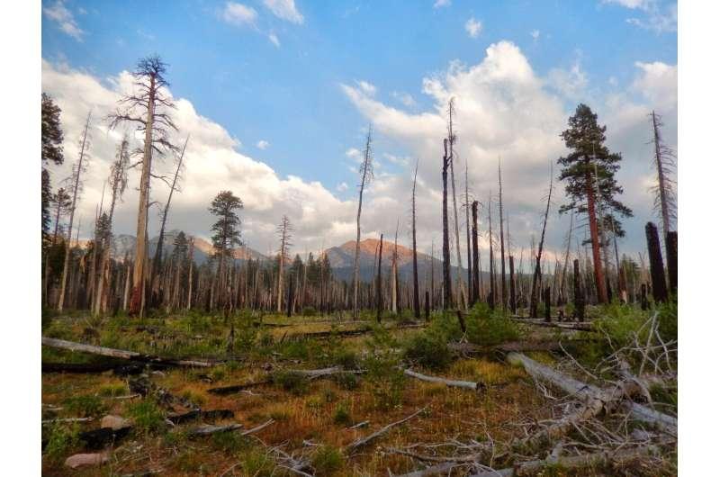 Un estudio encuentra que los incendios naturales ayudan a las abejas nativas a mejorar la seguridad alimentaria