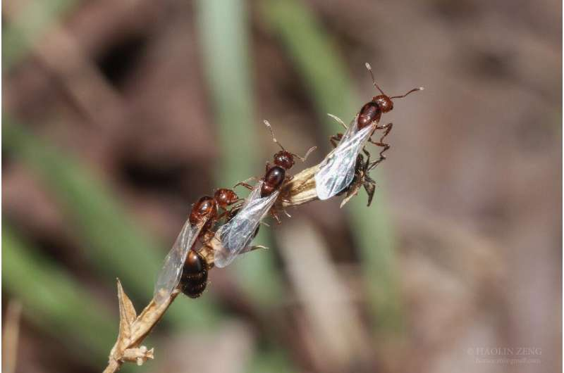 Supergene discovery leads to new knowledge of fire ants