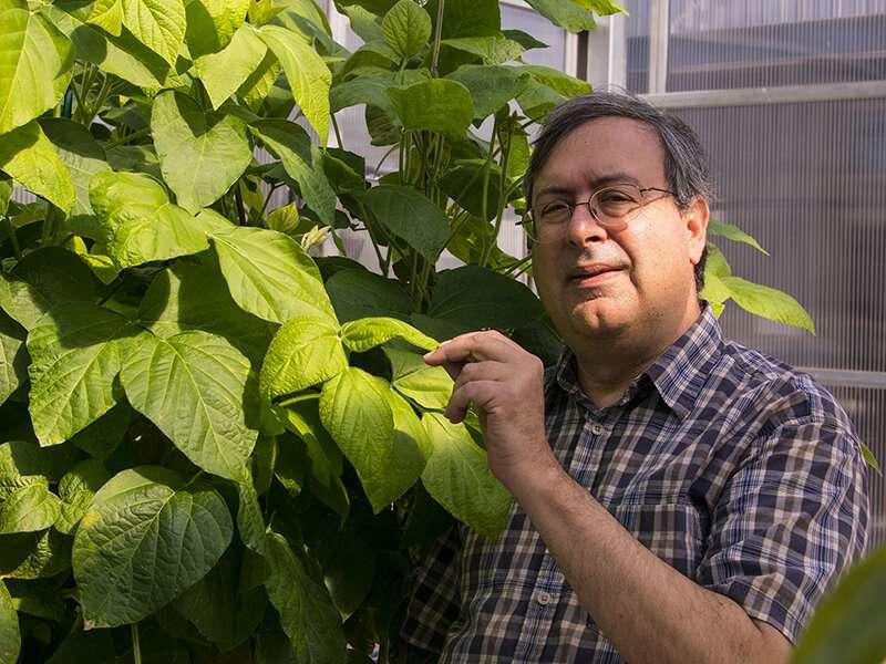 Tackling food allergies at the source