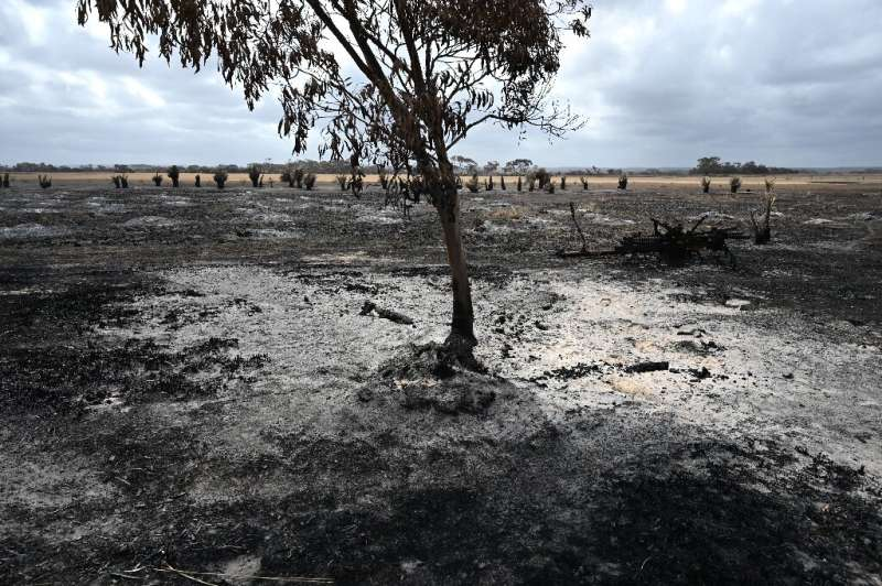 The catastrophic bushfires have left dozens dead and devastated vast swathes of the country since September
