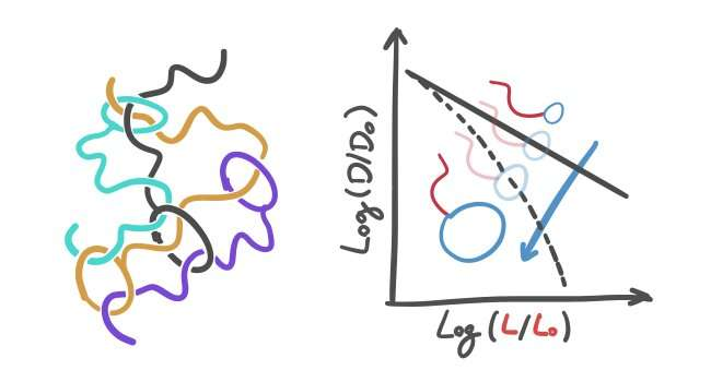 'The head-tail of tadpoles': The dynamics of polymers with a very singular shape