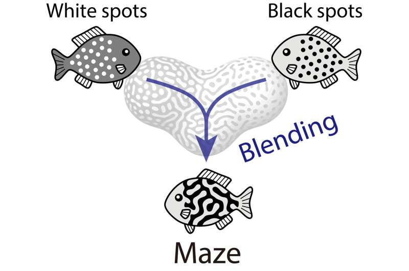 The making of mysterious mazes: how animals got their complex colorations