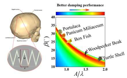 The relationship between delicate suture structure and damping performance of bi...       [2020-06-09]