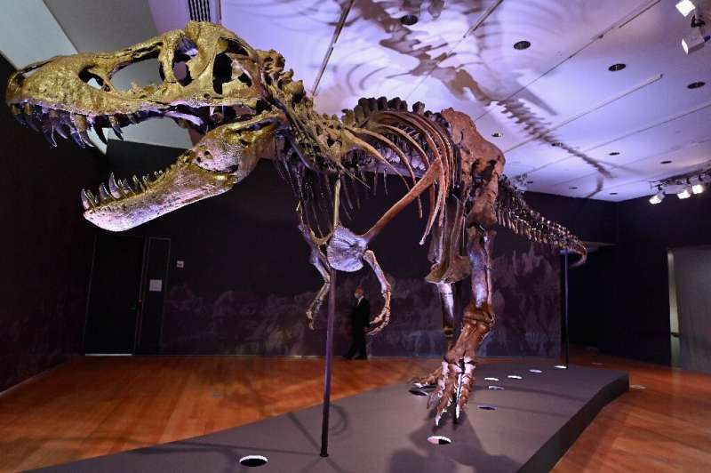 The remains of a Tyrannosaurus rex named Stan will go on sale in New York