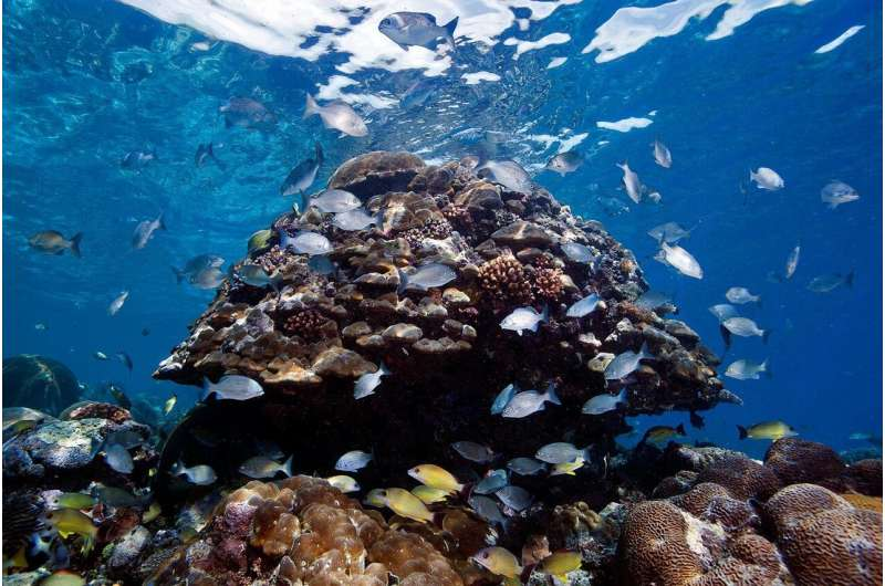 The state of coral reefs in the Solomon Islands