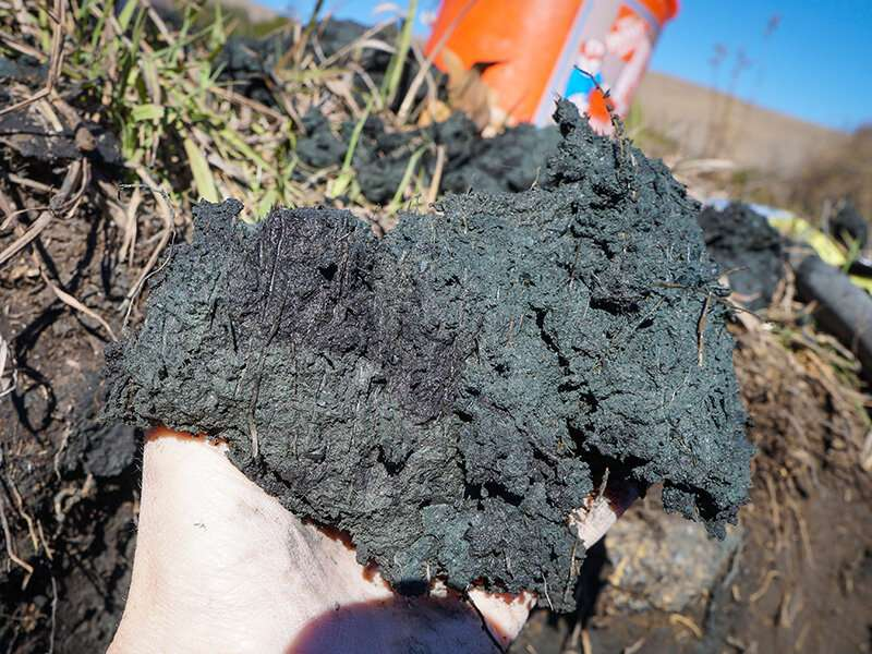 The story behind a uniquely dark wetland soil