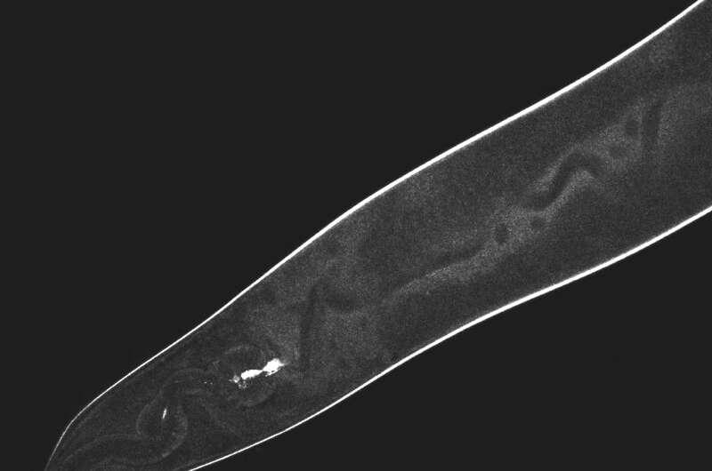 Tissue-digging nanodrills do just enough damage