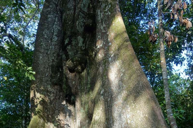 Trees struggle when forests become too small