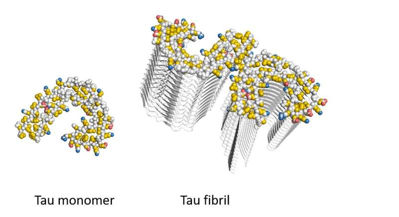Uncovering the unusual way aggregates hijack proteins
