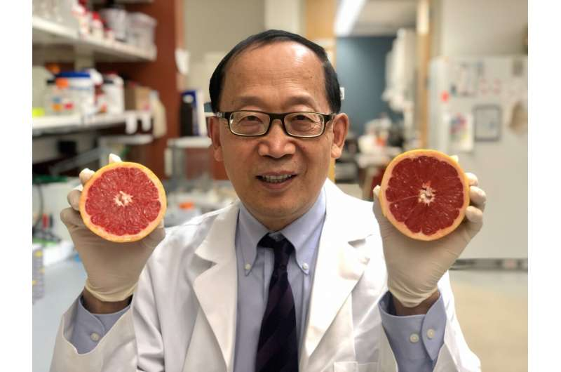 UofL researcher uses fruit for less toxic drug delivery