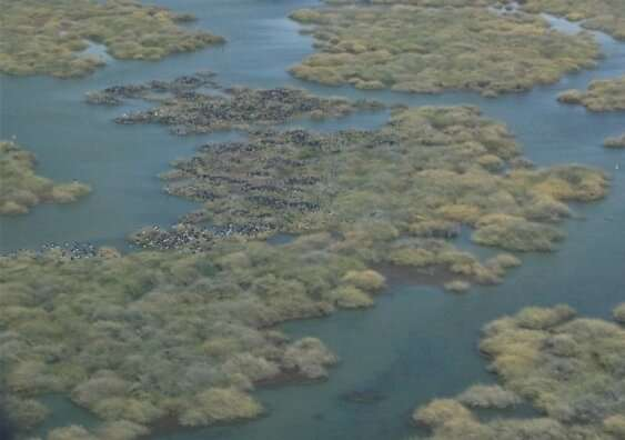 Waterbird numbers and wetland areas declining despite temporary relief: aerial survey