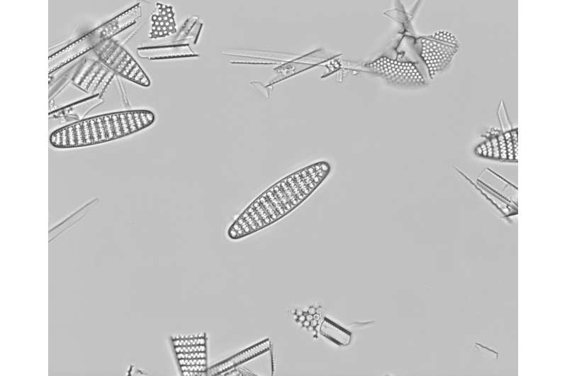 What caused the ice ages? Tiny ocean fossils offer key evidence