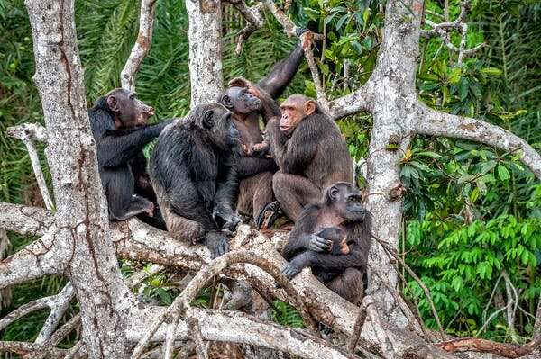 What primates can teach us about managing arguments during lockdown