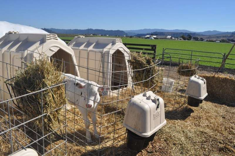 Why it's wrong to blame livestock farms for coronavirus