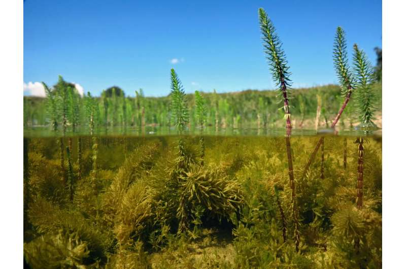 Why plants in wetlands are highly productive