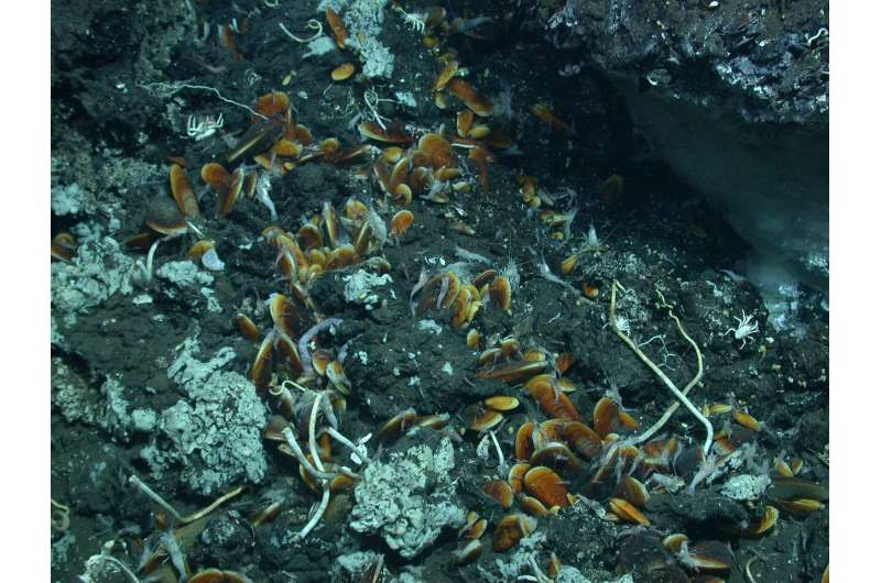 Window to another world: Life is bubbling up to seafloor with petroleum from deep below