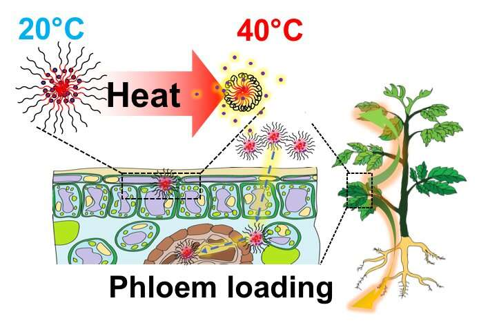 Nanoparticles to immunize plants against heat stress