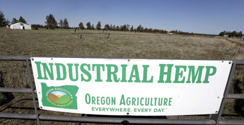 High anxiety: Proposed US hemp rules worry industry