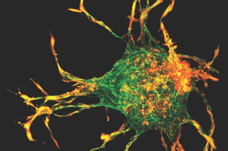 New insights into wound healing
