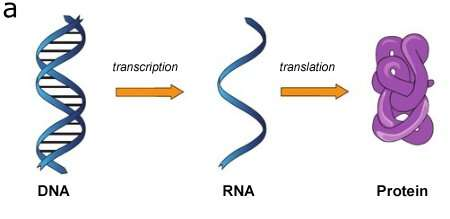 New technology will show how RNA regulates gene activity