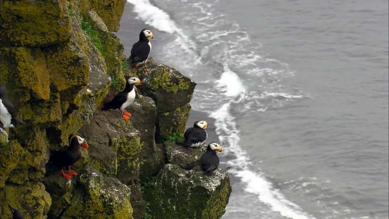 Scientists shed new light on how seabirds cruise through air and water