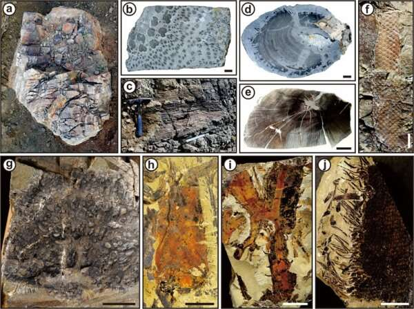 Researchers Date Age of the Oldest-known Forest in West Junggar Region, China