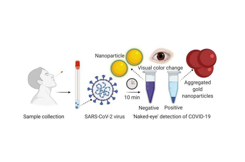 Researchers develop experimental rapid COVID-19 test using nanoparticle technique