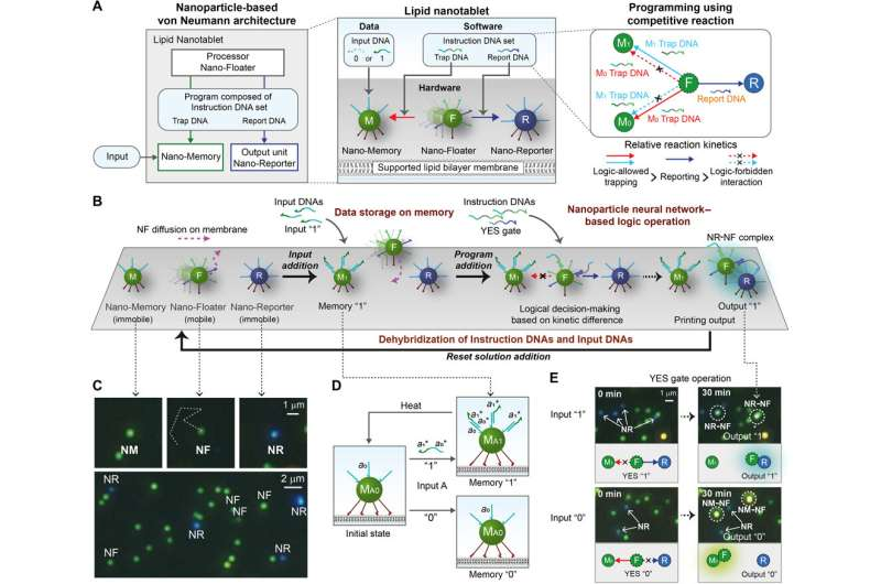 Nanoparticle-based computing architecture for nanoparticle neural networks
