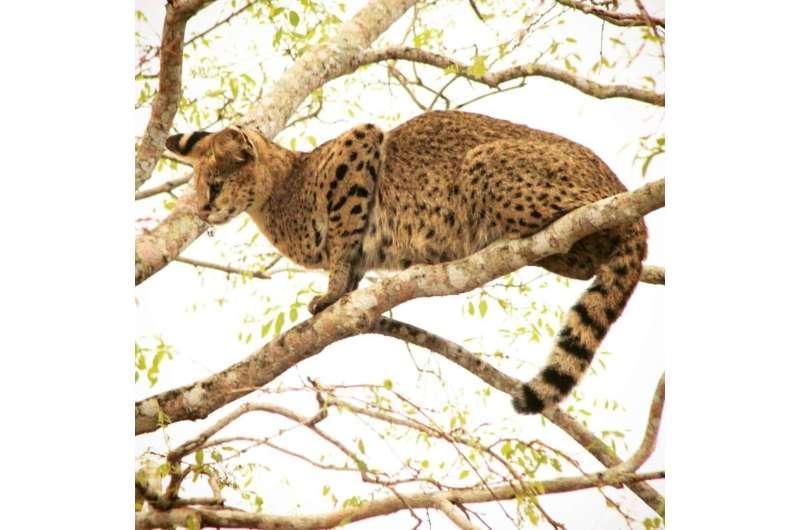 Study examines how civil wars affect wildlife populations