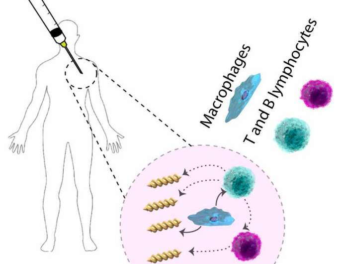 Exploring the interactions between microswimmer medical robots and the human immune system