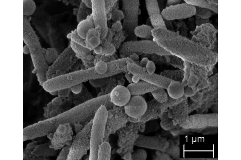 Global spread of the multi-resistant pathogen Stenotrophomonas maltophilia