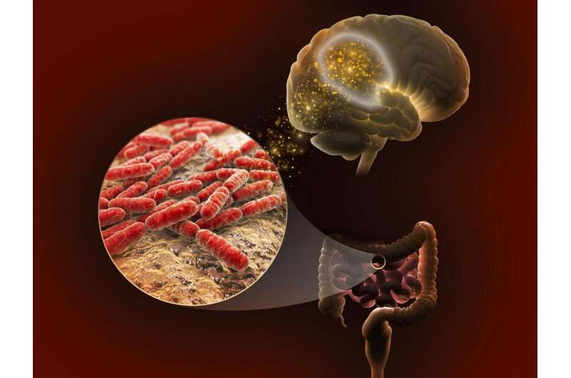 Scientists explore links between genetics, gut microbiome and memory
