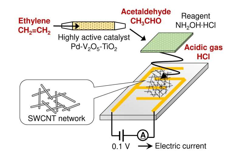 Development of a small sensor capable of continuously monitoring the phytohormone ethylene