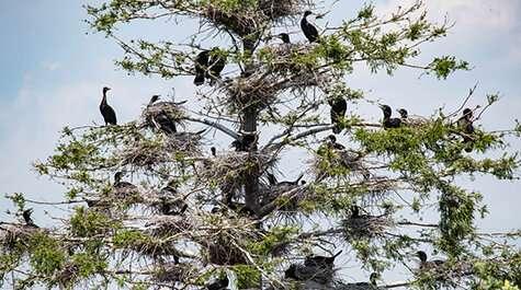 Social distancing in birds