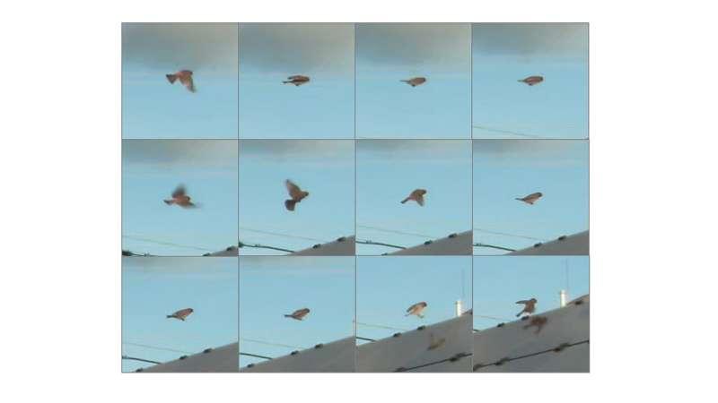 Deep learning system will monitor birds at solar facilities