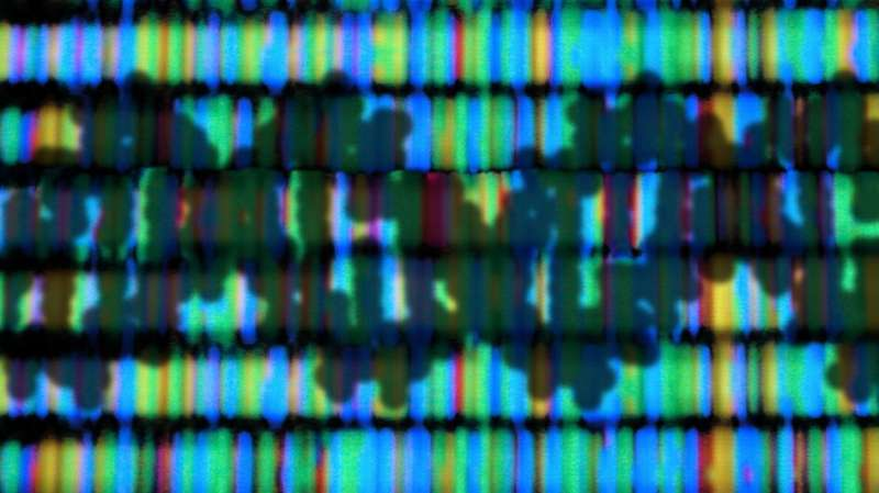 Scientists expand understanding of how DNA is organised