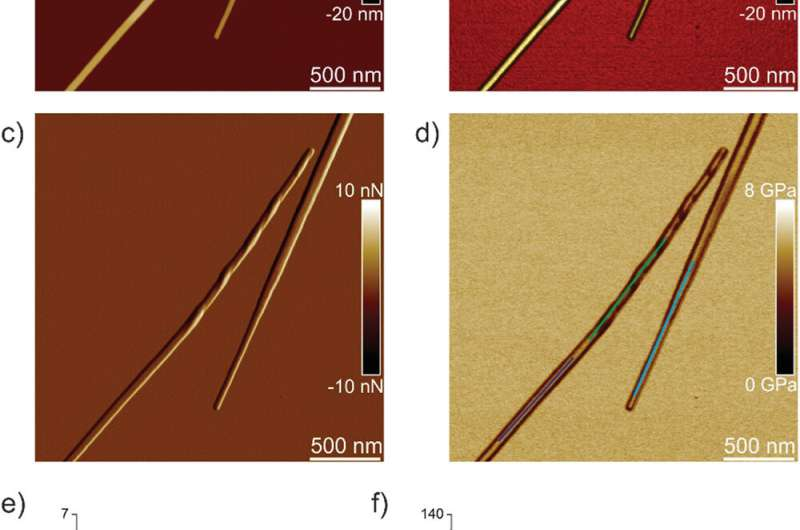 The evolution of single amyloid fibrils into microcrystals