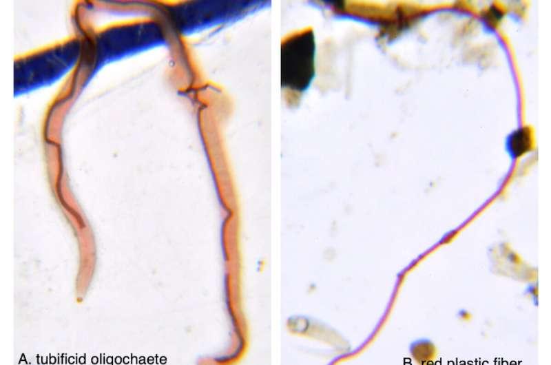 Microplastics found in a quarter of San Diego estuary fish