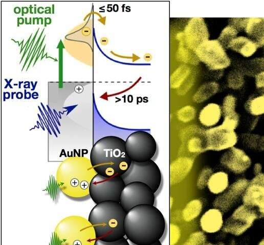 Scientists capture candid snapshots of electrons harvesting light at the atomic scale