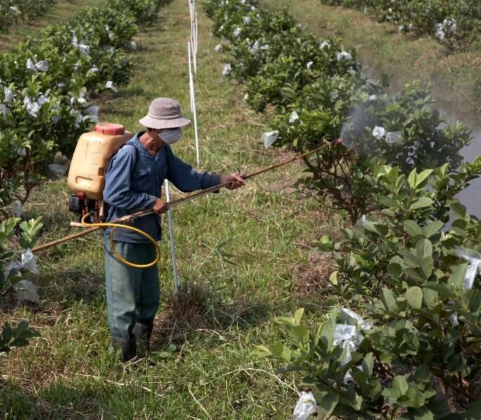 New study reveals use of antibiotics on crops is more widespread than previously thought