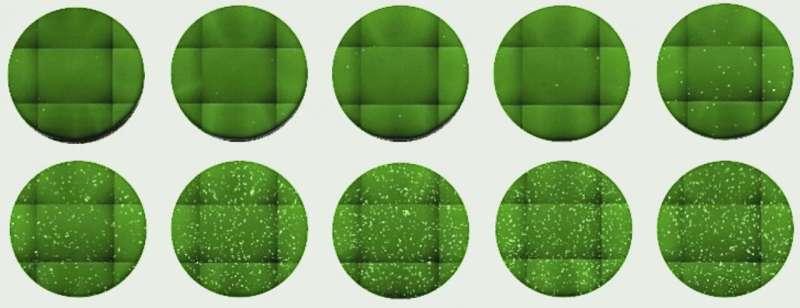 Researchers develop new tools to rapidly test activity of anti-coronavirus antibodies