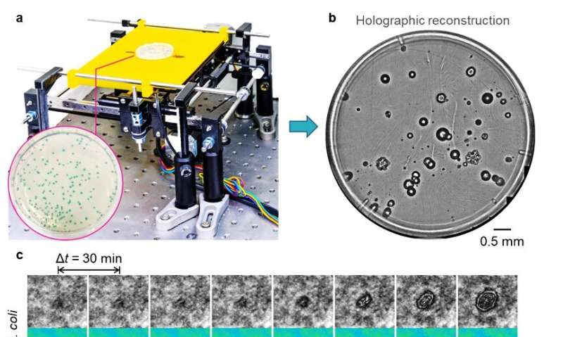 Deep learning enables early detection and classification of live bacteria using holography