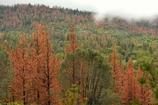 Researchers look into the effects of repeated droughts on different kinds of forests