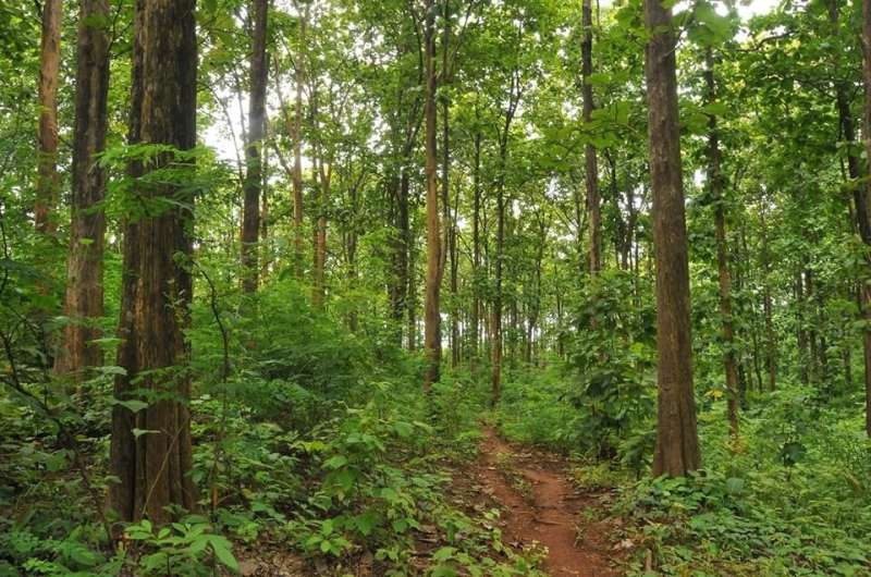 Researchers Reconstruct Drought Variability from Teak Tree Rings in Southern Myanmar