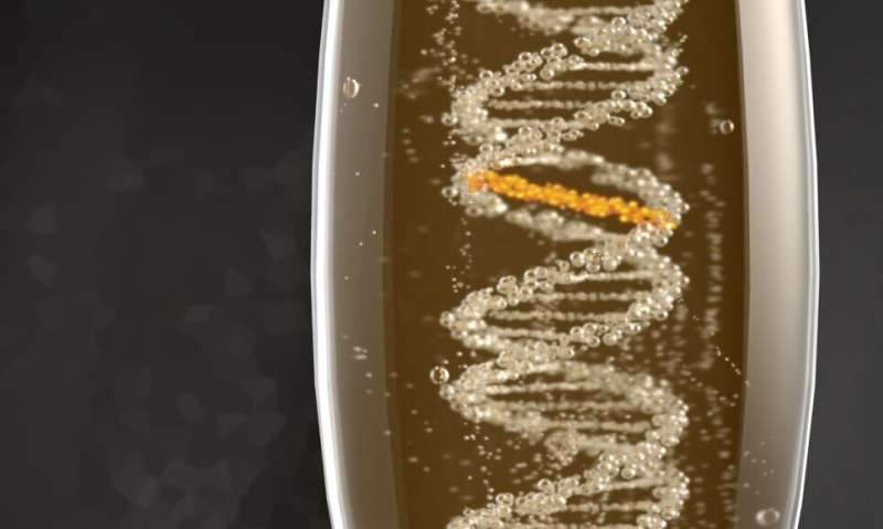 Scientists discover new repair mechanism for alcohol-induced DNA damage
