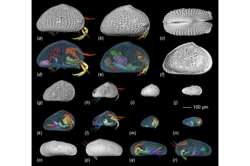 100-million-year-old amber reveals sexual intercourse of ostracods